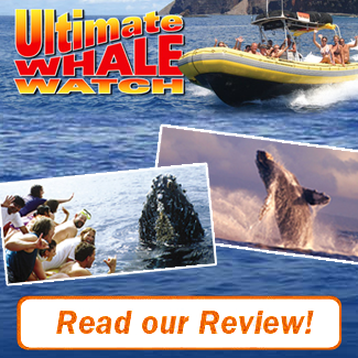 Ultimate Whale Watch Review