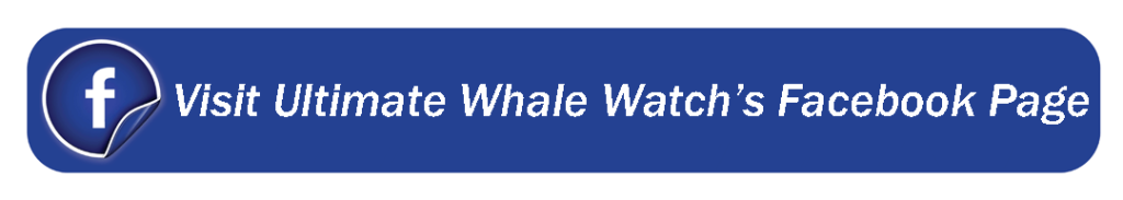 Facebook_Web_Banner_UltimateWhaleWatch